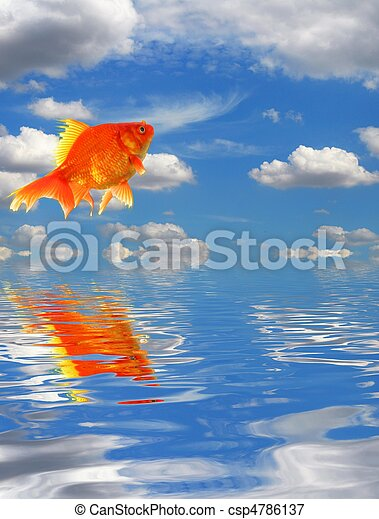 Image de bleu ciel poisson rouge eau reflet nuages for Tarif poisson rouge