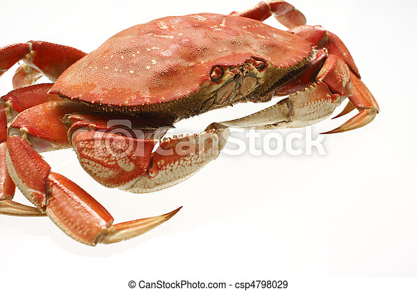 A cooked dungeness crab - csp4798029