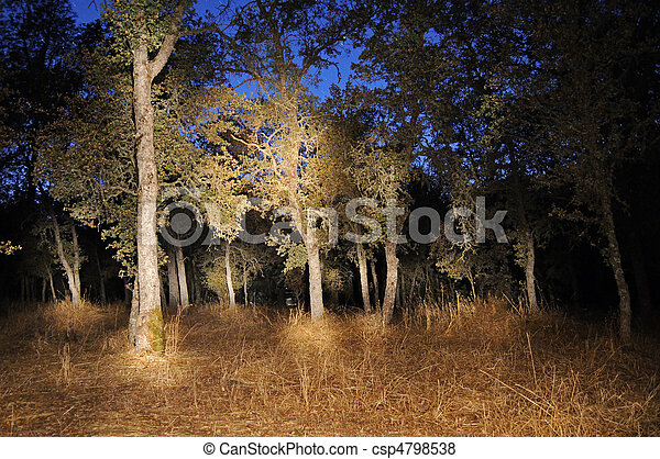 Forest Tree Woods Light Painting at Night - csp4798538