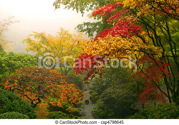 Japanese Maple Trees in the Fall - csp4798645