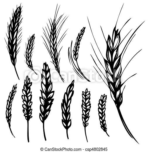 cliparty wektorowe  u017cyto  pszenica komplet  od   u017cyto  i