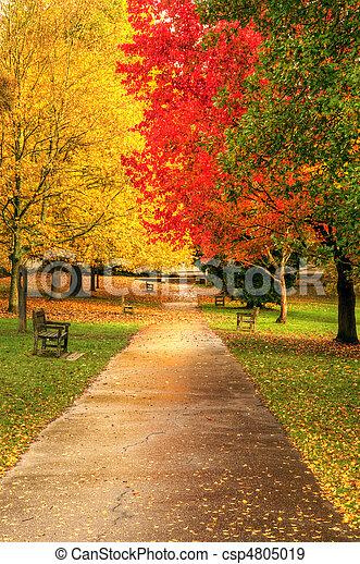 Beautiful Autumn Fall forest scene - csp4805019