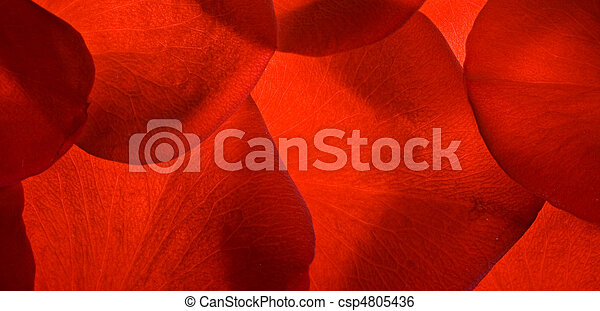 red rose petals closeup background - csp4805436