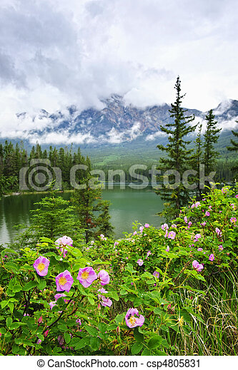Wild roses and mountain lake in Jasper National Park - csp4805831