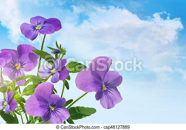 Purple violet flowers against a blue sky - csp48127889