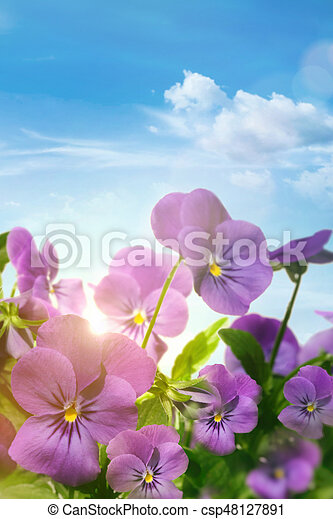 Spring violet flowers against a blue sky - csp48127891