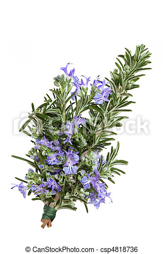 Rosemary Herb Flower - csp4818736