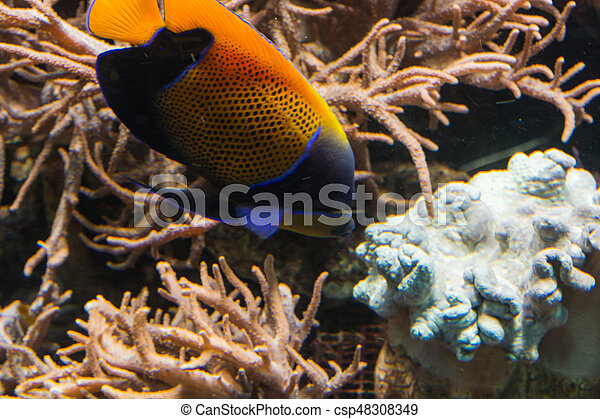 Underwater shot, fish in an aquarium with coral and sea anemone.