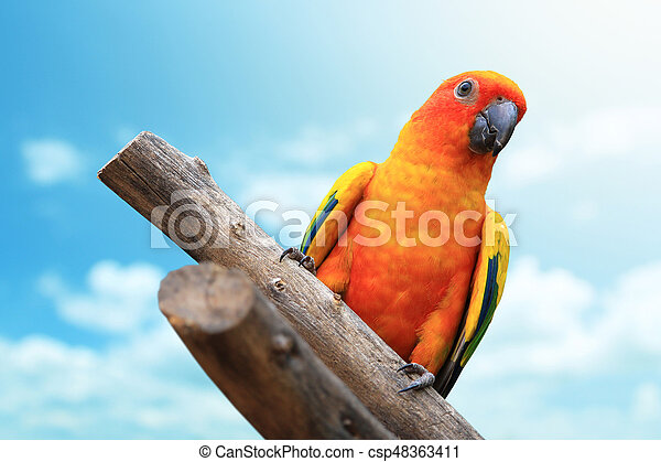 Macaw Parrot with blue sky - csp48363411