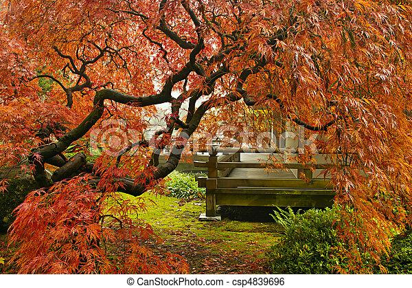 stock bild von japanisches rotes spitze blatt ahorn baum in herbst csp4839696. Black Bedroom Furniture Sets. Home Design Ideas