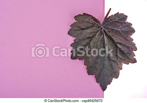 Purple leaves Heuchera on pastel pink background. Minimal nature summer concept. Studio Photo