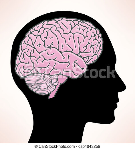 Illustration of human brain - csp4843259