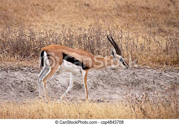 403 forbidden for Gazelle cuisine hors serie