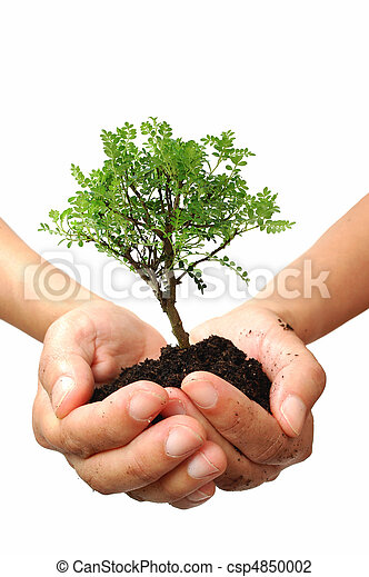 Tree in a hand - csp4850002