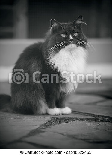 Black-and-white image of a fluffy cat of a smoky color