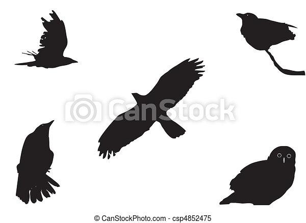 big birds - csp4852475