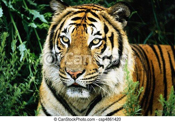 荒野, 動物 - csp4861420