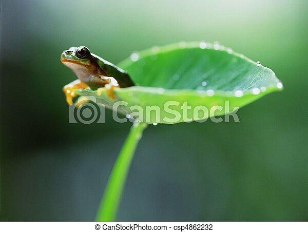 Stock Photo of Wild Animal