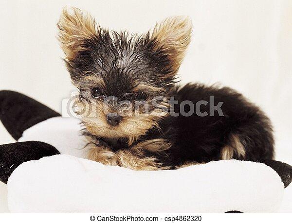 Pet Animal - csp4862320