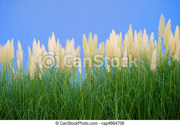 environment-friendly reeds - csp4864706