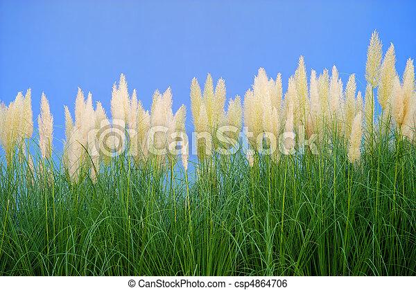 environment-friendly reeds - csp4864706