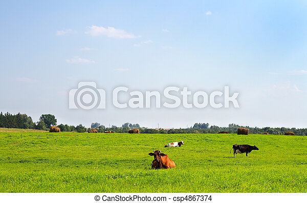 rural landscape with cows - csp4867374