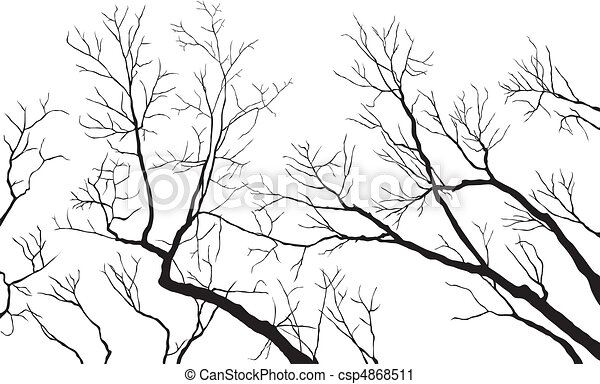 Bare Branches - csp4868511