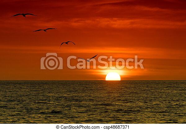 Pelicans in the Sunset - csp48687371