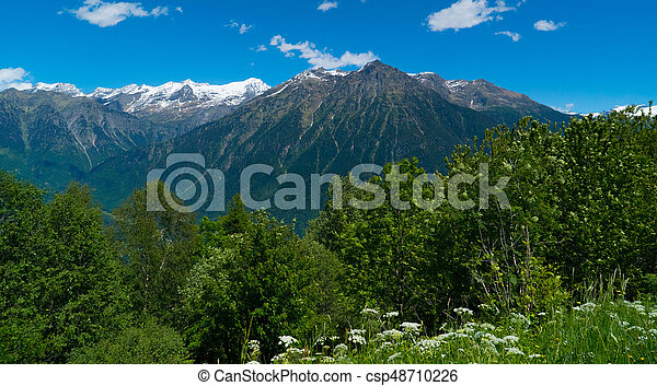 Forest on the rocky mountains in switzerland. Kanton Tessin. - csp48710226