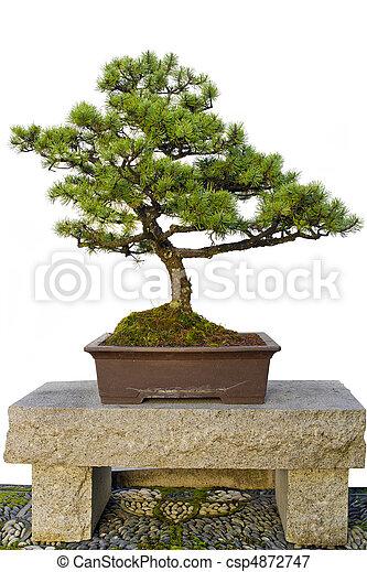 Image de bonsai arbre s ance pierre banc chinois for Jardin chinois miniature