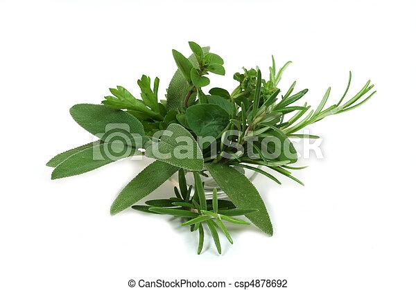 Green seasoning - csp4878692