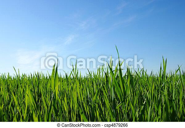green lawn - csp4879266