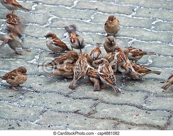 birds reportage - csp4881082