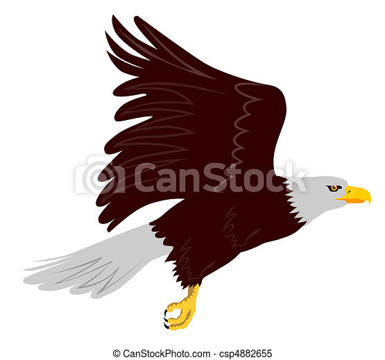 bald eagle flying side view - csp4882655