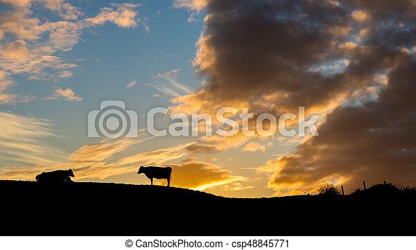 Sunrise Cattle - csp48845771