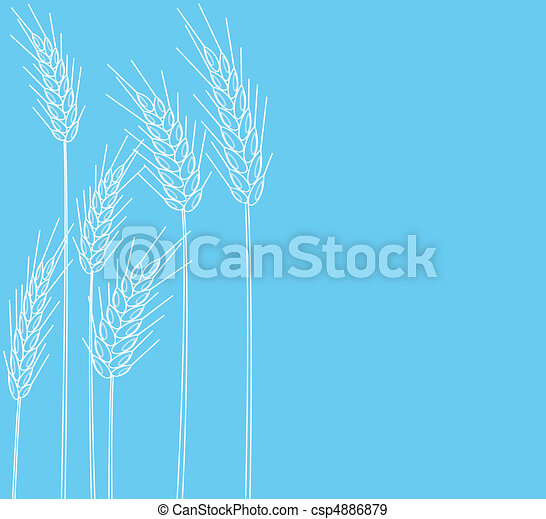 cones of wheat - csp4886879