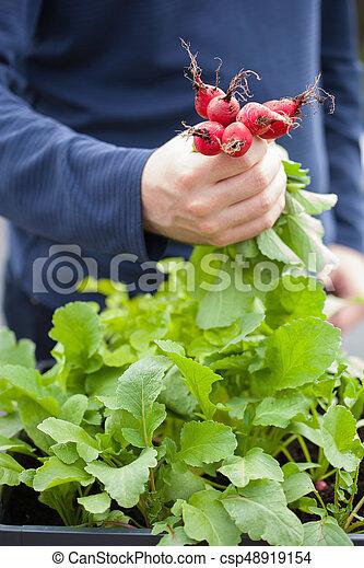 man gardener picking radish from vegetable container garden on balcony