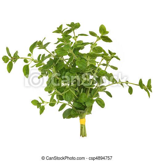 kruid, bladeren, oregano - csp4894757