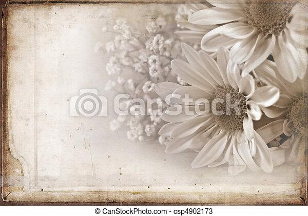 Textured Daisy - csp4902173