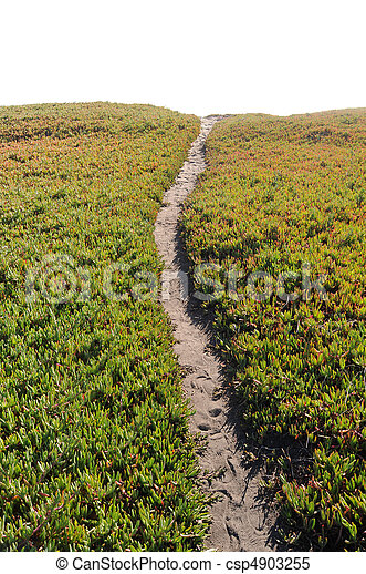 Ice Plant Field with Dirt Pathway - csp4903255
