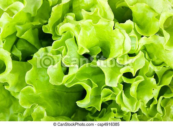 Fresh green Lettuce salad - csp4916385