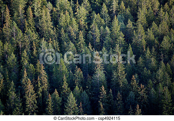 Forest tree tops - csp4924115