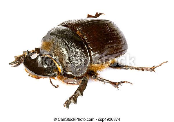 Dung Beetle - csp4926374