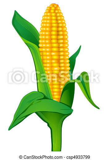 Indian corn Clip Art and Stock Illustrations. 2,132 Indian corn ...