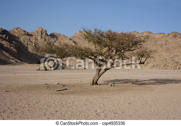 barren tree in the desert - csp4935336