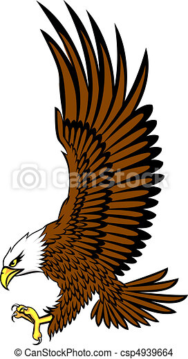 bald eagle vector - csp4939664