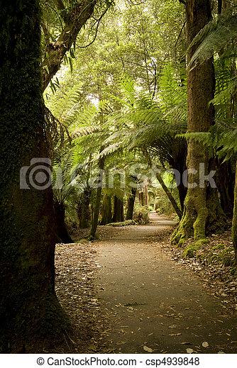 Forest Pathway - csp4939848
