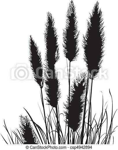 Pampas Grass Silhouette - csp4942894