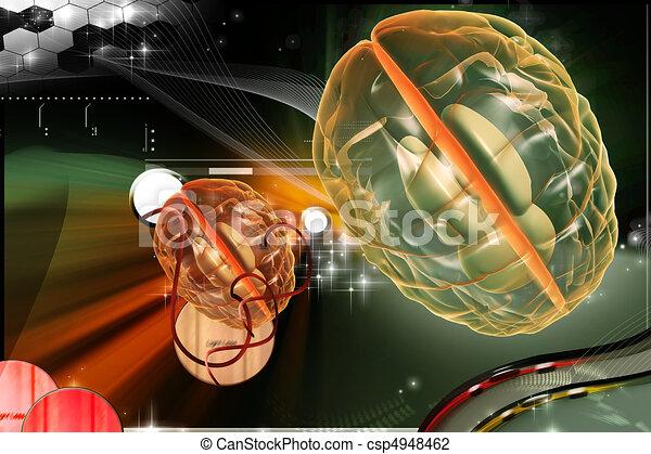 Brain - csp4948462