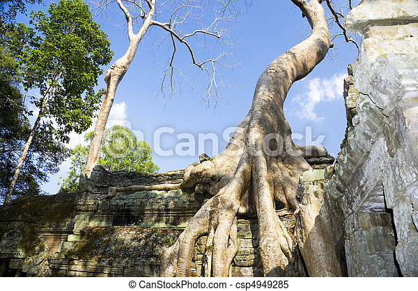 Enormous Tree Entwining Ta Prohm, Cambodia - csp4949285